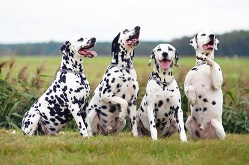 Tierisch tolle Geschenke Hundezahnpflege Hundezahnpflege