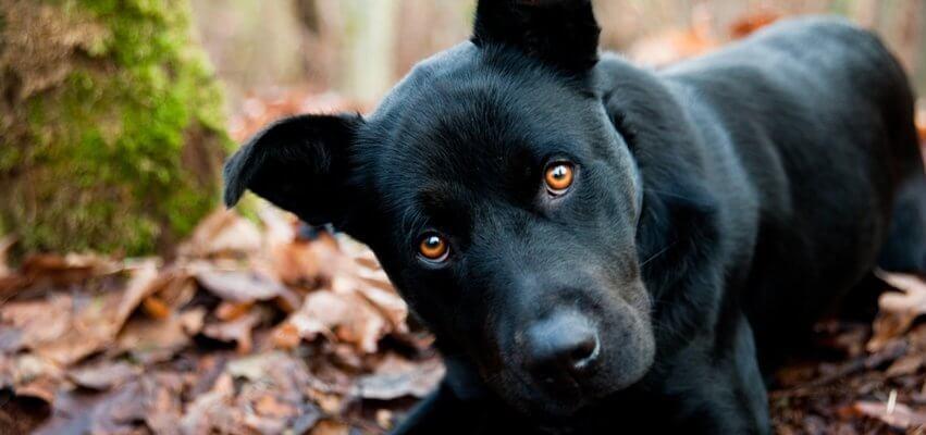 Hundefutter mit viel Fleisch Hundezahnpflege Hundezahnpflege