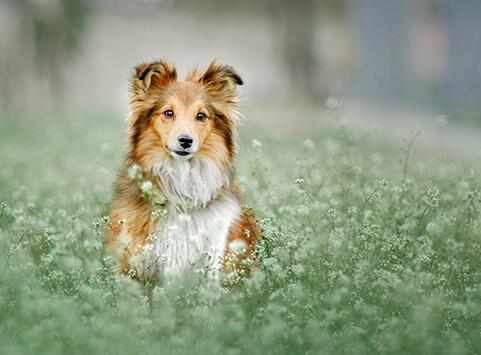 Hundezahnpflege Hundezahnpflege